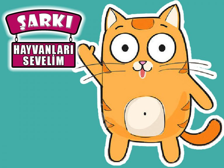 Hayvanları sevelim şarkısı   Dün minik bir kedi yanıma geldi