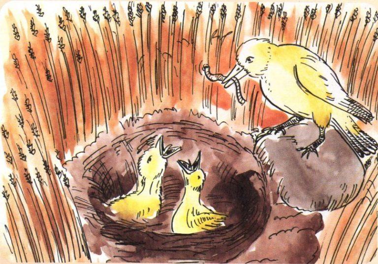 Tarla Kuşu İle Yavruları Masalı   Hikaye, Öykü, Masal Dinle