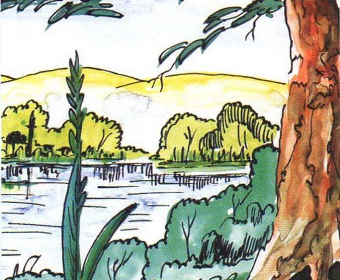 Büyük Ağaç ile Küçük Kamış Masalı Dinle|Kısa Hikayeler Oku